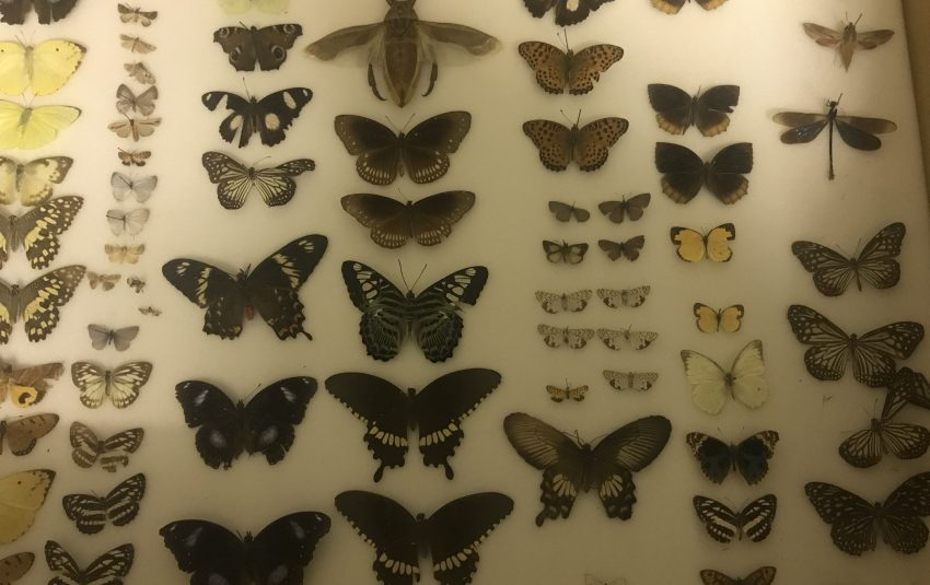 Museums Northumberland collections exotic insects at Berwick Museum
